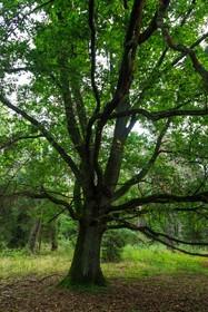 Rezerwat przyrody Bażany