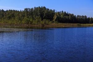 Rezerwat przyrody Smolnik